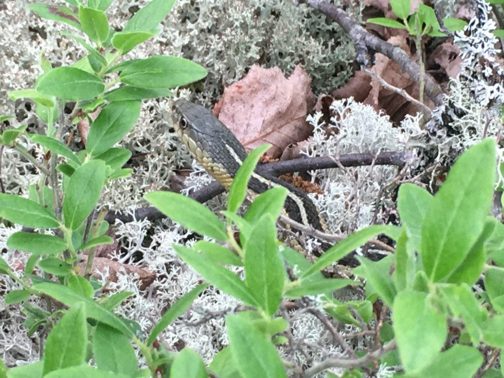 Snake in Silver Falls Provincial Park Ontario